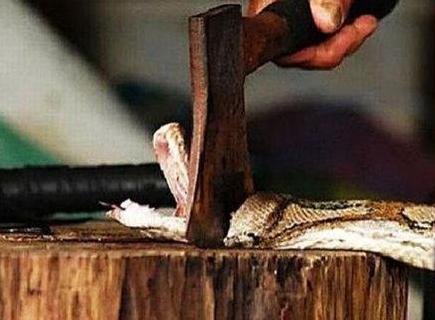打蛇吃蛇无数变成蛇人真的是蛇的一种报复行为么